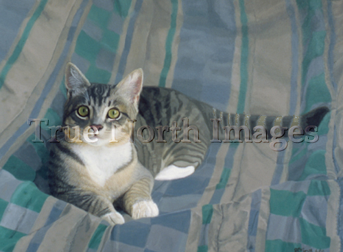 painting of kitten on a quilt