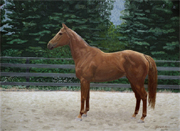 chestnut thoroughbred mare painted pet horse portrait