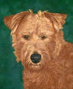 vignette head and shoulders of an irish terrier painted pet dog portrait