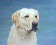 painting of white Labrador Retrieve 1